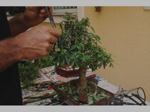 Todo sobre kit bonsai care kit