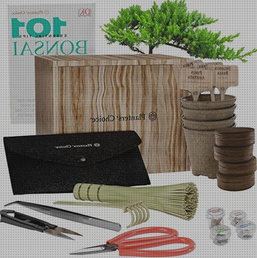 Review de kit kit iniciacion bonsai con arbol incluido
